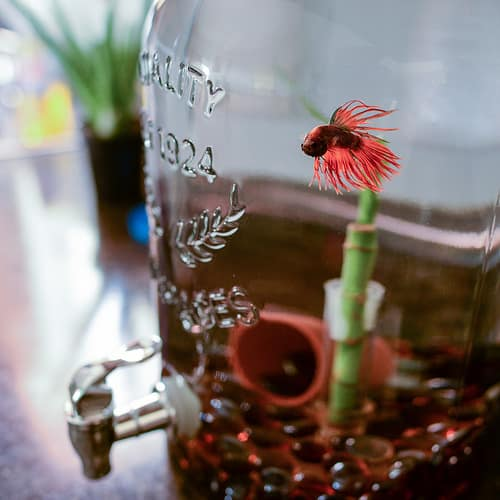 betta fish tank - best betta fish tanks reviews