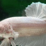 All You Need To Know About Betta Fish