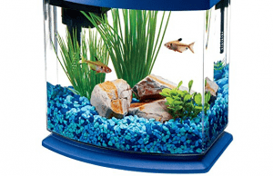 top betta fish tank
