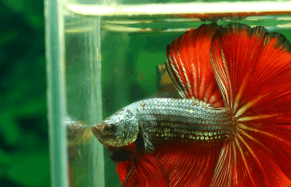 How To Setup A Betta Fish Tank Betta Fish Home Guide
